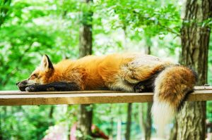 rhume_dormir_encore