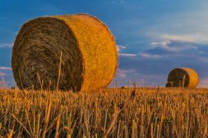 favoriser_l'agriculture_locale